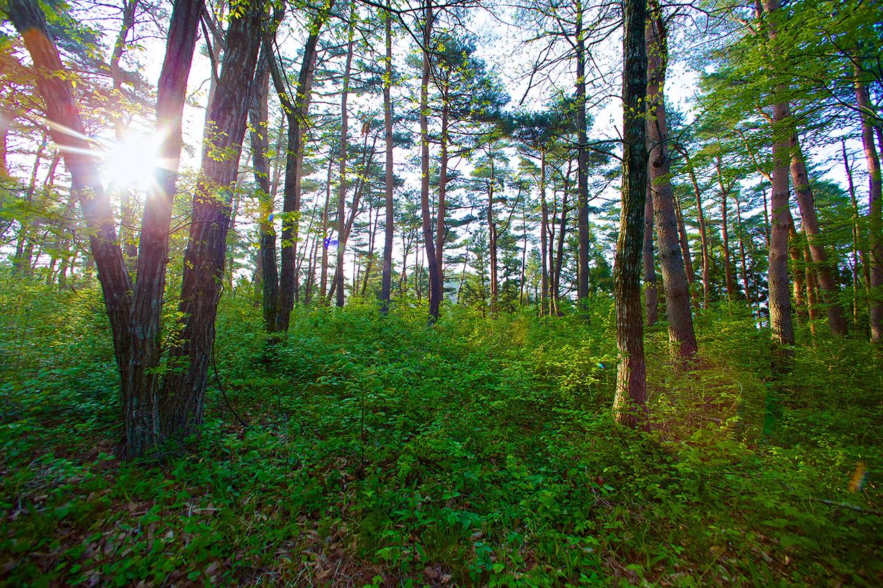 登米市の森林